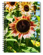 Red Sunflower Spiral Notebook