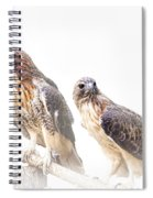 Red Tail Hawk Pair On White Background Spiral Notebook