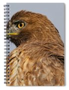 Red Tail Hawk Portrait Spiral Notebook