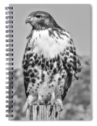 Red Tail Hawk Youth Black And White Spiral Notebook