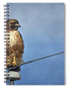Red Tail On Watch Spiral Notebook