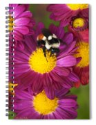 Red-tailed Bumble Bee Spiral Notebook