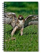 Red-tailed Hawk & Gopher Snake Spiral Notebook