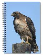 Red-tailed Hawk Monterey California  2008 Spiral Notebook
