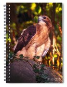 Red Tailed Hawk - 53 Spiral Notebook