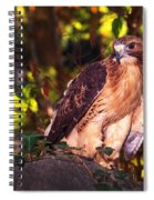 Red Tailed Hawk - 54 Spiral Notebook