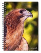 Red Tailed Hawk - 59 Spiral Notebook