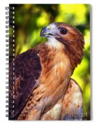 Red Tailed Hawk - 66 Spiral Notebook