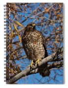 Red-tailed Hawk In A Willow Tree Spiral Notebook