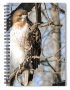 Red-tailed Hawk Looking Spiral Notebook