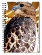 Red Tailed Hawk  Spiral Notebook