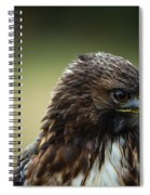 Red-tailed Hawk Portrait Spiral Notebook