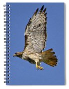 Red-tailed Hawk Takeoff Spiral Notebook