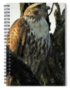 Red Tailed Morning Spiral Notebook