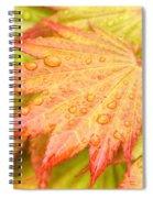 Red Tip Leaf Spiral Notebook