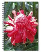 Red Torch Ginger Spiral Notebook