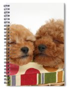 Red Toy Poodle Puppies Spiral Notebook