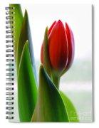 Red Tulip Day 1 Spiral Notebook