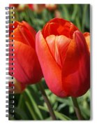 Red Tulips Flowers Pink Orange Tulip Flowers Spiral Notebook