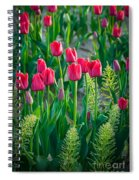 Red Tulips In Skagit Valley Spiral Notebook