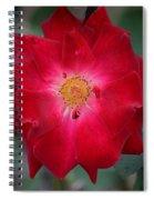 Red Velvet 1b Spiral Notebook