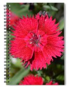 Red Winery Flower Spiral Notebook