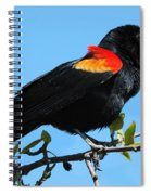Red Wing Blackbird 2 Spiral Notebook