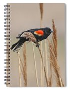 Red-wing Blackbird Spiral Notebook