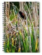 Red-winged Black Bird In The Cattails Spiral Notebook
