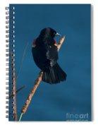 Red Winged Black Bird Spiral Notebook