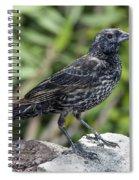 Red-winged Blackbird Spiral Notebook