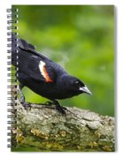 Red Winged Blackbird Spiral Notebook