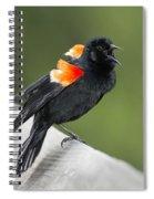 Red-winged Blackbird Display Spiral Notebook