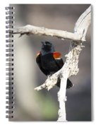 Red-winged Blackbird Spiral Notebook