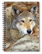 Red Wolf Portrait Spiral Notebook
