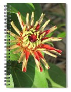 Red Zinnia- Early Bloom Spiral Notebook