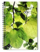 Catalpa Branch Spiral Notebook