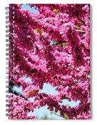 Redbud In Bloom Spiral Notebook