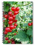 Redcurrant Berries Spiral Notebook