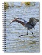 Reddish Egret Canopy Feeding Spiral Notebook