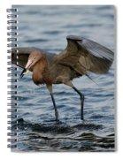 Reddish Egret Egretta Rufescens Spiral Notebook
