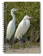 Reddish Egret Egretta Rufescens Pair Spiral Notebook