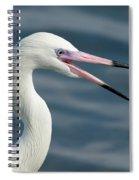 Reddish Egret Egretta Rufescens Portrait Spiral Notebook