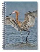 Reddish Egret Fishing Spiral Notebook
