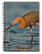 Reddish Egret Strike Spiral Notebook