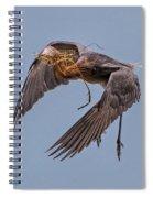 Reddish Egret With Nest Building Spiral Notebook