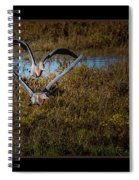 Reddish Egrets Spiral Notebook