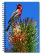 Redheaded Tree Topper Spiral Notebook