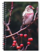 Redpoll On Crabapple Tree Spiral Notebook
