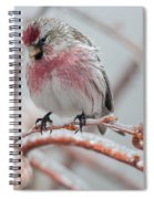 Redpoll Shy Pose Spiral Notebook
